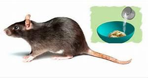 Répulsif Souris Efficace : ces 3 astuces naturelles vous d barrasseront des rats et des souris pour de bon bricolage ~ Melissatoandfro.com Idées de Décoration