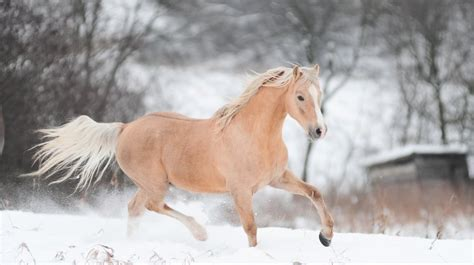 horse running snow wallpapers hd