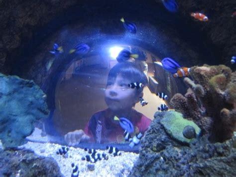 sea aquarium carlsbad ca kid friendly activity reviews trekaroo