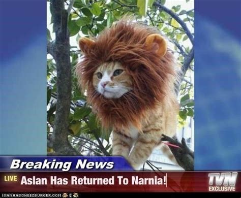 narnia memes english breaking news aslan  returned
