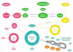 Topic 2 1 Molecules To Metabolism