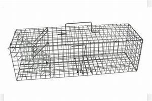 Piege à Rat Efficace : piege a rat ~ Dailycaller-alerts.com Idées de Décoration