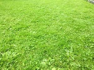 Rasen Richtig Düngen : richtig vertikutieren n tzliche pflegetipps f r einen sch nen rasen ~ Frokenaadalensverden.com Haus und Dekorationen