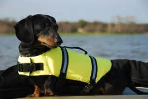 Dachshunds Dogs Life Jackets