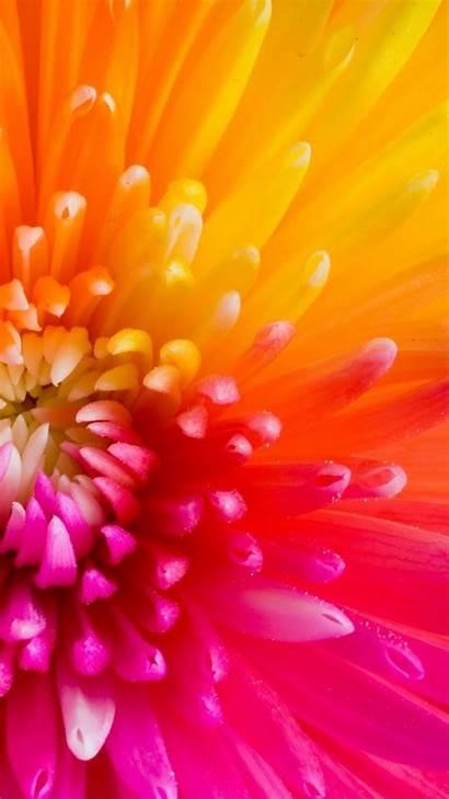 Nice Iphone Flower Screen Plus Flowers Wallpapers