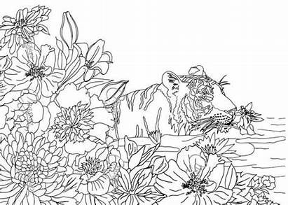 Nature Pages Coloring Adult Tiger Adults Sheets