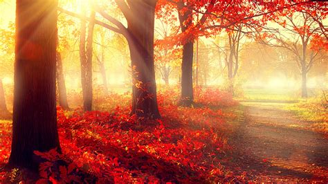 Beautiful Autumn Trees Wallpapers by Wallpaper Park 5k 4k Wallpaper Autumn Beautiful