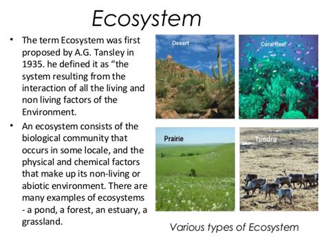 Ecosystem Definition Biology Biodiversity Exles For Kids Www Imgkid Com The