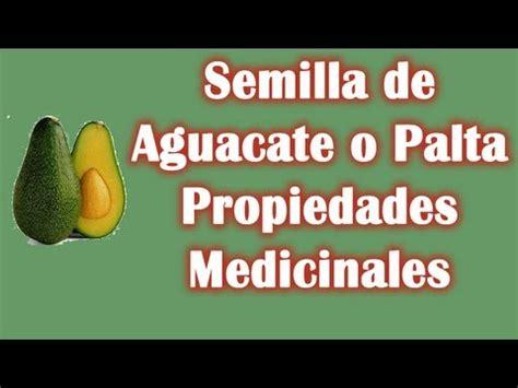 el organo y sus propiedades buena salud semilla de aguacate 243 palta propiedades medicinales y
