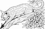 Coloring Cat Pages Cats Leopard Tree Realistic Adult Print Colour Adults Animals sketch template
