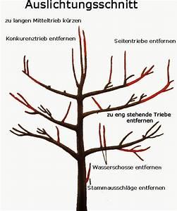 Apfelbaum Wann Schneiden : 567 680 pixel gr nes pinterest bonsai gardens and organic gardening ~ Frokenaadalensverden.com Haus und Dekorationen