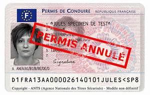 Annulation Permis De Conduire : annulation du permis de conduire candidat libre ~ Medecine-chirurgie-esthetiques.com Avis de Voitures
