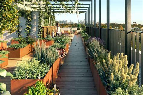 three boys one rooftop garden abc australian broadcasting