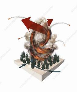 Forest Fire Tornado  Artwork  8079