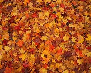 25+ unique Fall leaves wallpaper ideas on Pinterest