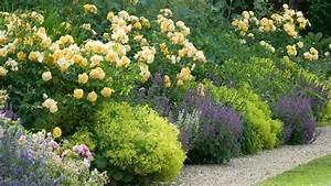 Begleitpflanzen Für Rosen : rosen lieben begleiter rosenshop haemmig ~ Lizthompson.info Haus und Dekorationen
