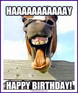 Happy Birthday Memes with Funny Cats, Dogs and Cute Animals