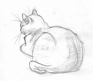 simple animal sketches - Google Search | Animal Sketches ...