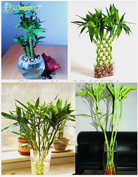 plantation bambou en pot pot bambou promotion achetez des pot bambou promotionnels sur aliexpress alibaba