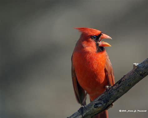 guided bird walks in gillson park wilmette