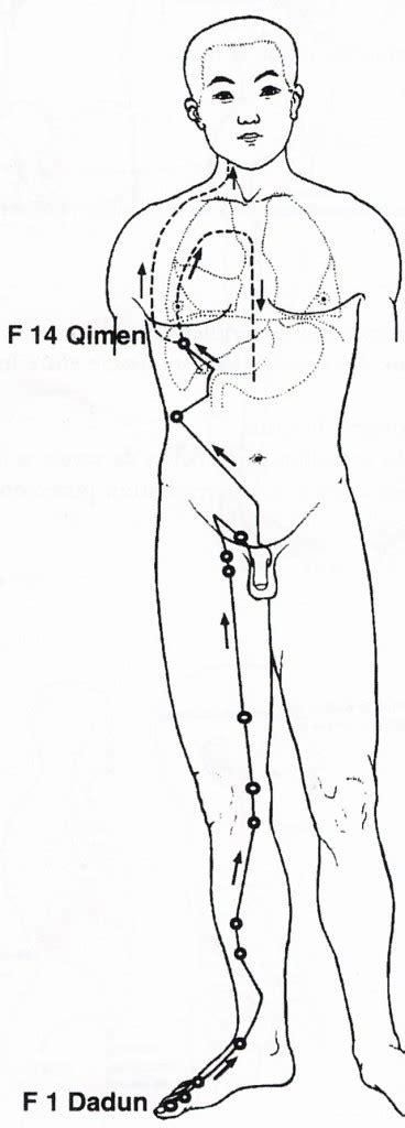 meridien du corps humain le meridien du foie tao et spiritualit 233