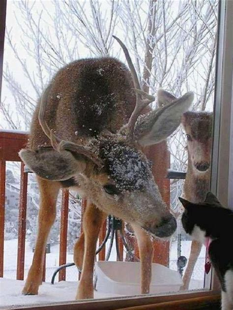 cute deer   cat  glass door luvbat