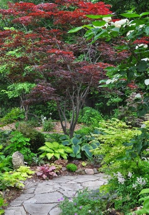 growing and care for japanese maples home