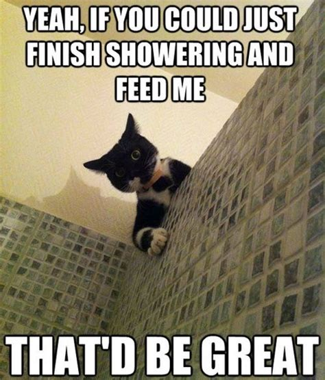 Funny Hungry Meme - hungry click for more healthy dogs cats and other pets pinterest