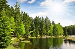 48 Tage Bayerischer Wald mit All Inclusive  Wellness ab 99�