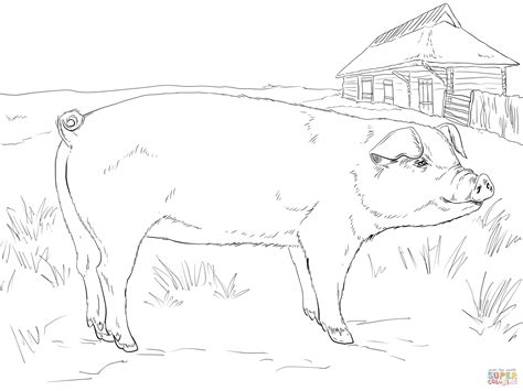 adult pig coloring page free printable coloring pages