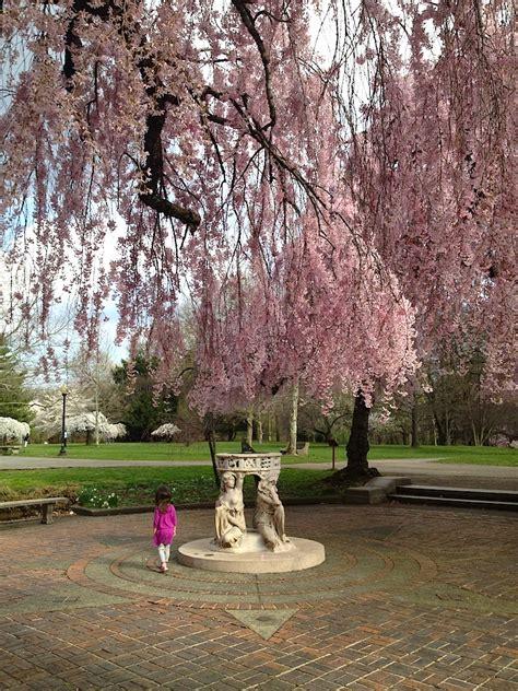 Family Garden Reading Pa by Cherry Blossoms In Philadelphia 2019 Travelingmom