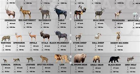 Game Animals: Africa vs North America INFOGRAPHIC