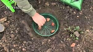 Planter Des Bulbes : les outils pour planter des bulbes en pleine terre ~ Dallasstarsshop.com Idées de Décoration