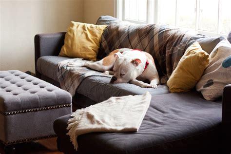best sofa for dogs best sofa for dogs new 28 sofa for dogs liloe beds 25 best