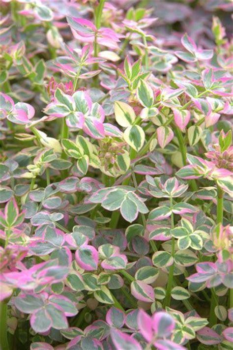 perennial plant care pinterest the world s catalog of ideas