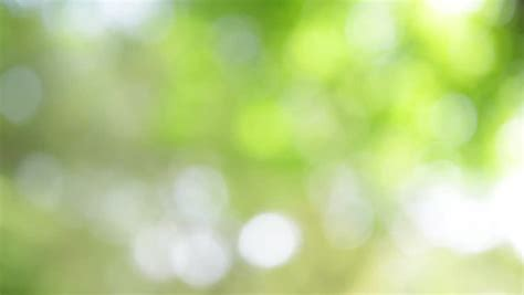 boke background nature blur  stock footage video