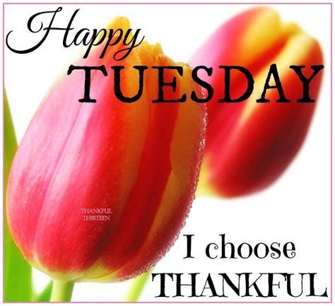 happy tuesday  choose thankful pictures
