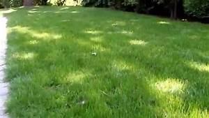 Vertikutieren Von Hand : vertikutieren unterschiede und ergebnisse von hand und elektrisch newwonder555 youtube ~ A.2002-acura-tl-radio.info Haus und Dekorationen