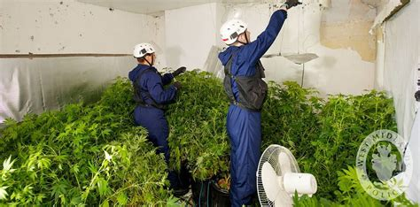 Eignen Sich Leds Zum Cannabis-anbau?