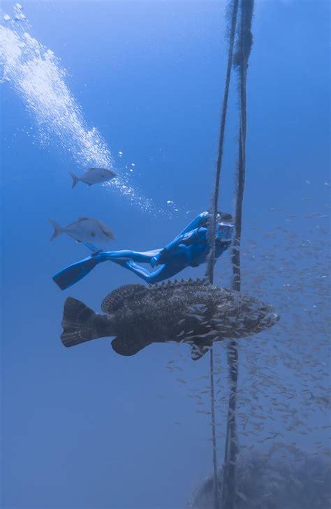 jewfish grouper goliath hook