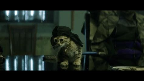 Key And Peele Cat Gif  Find & Share On Giphy