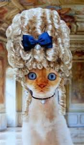 cat wigs cats wig cat wigs wigs for cat wigs for cat