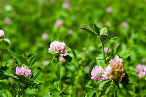 edible plants native wild plant common garden guide harvesting