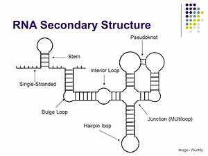 Why Is Dna Stable But Rna Is Not
