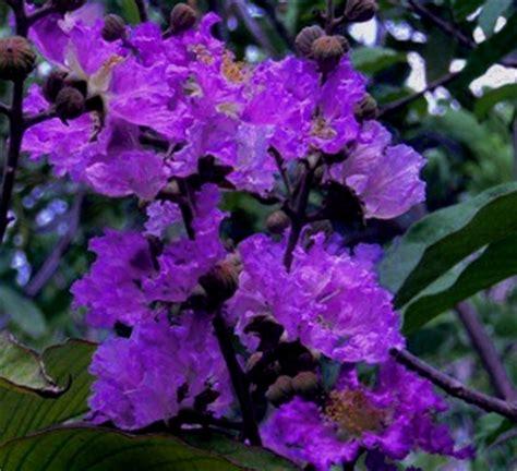 purple velvet   deep black violet