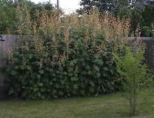 Zaun 2m Hoch : sichtschutzzaun 2m hoch sichtschutzzaun 2m hoch gepflanzt mit 20 ruten pro homestyle4u ~ Frokenaadalensverden.com Haus und Dekorationen