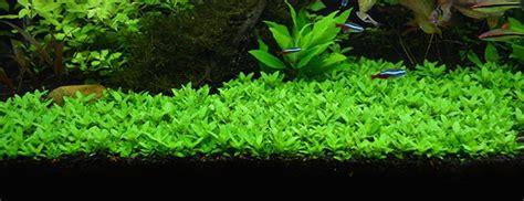 Aquascape Plants List by The 10 Best Freshwater Aquarium Plants For Beginners
