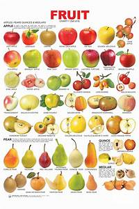 Image Gallery names of fruits
