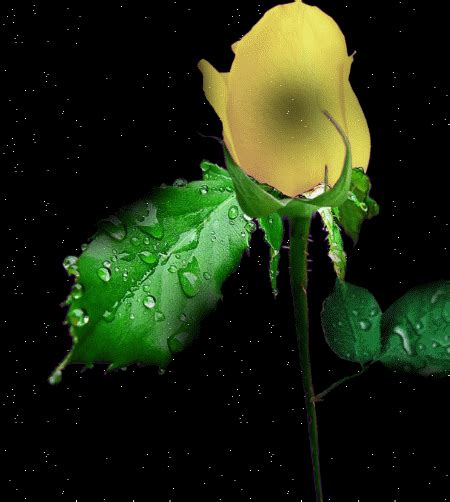 Animated Roses Wallpaper - animated flowers and animated flower wallpapers