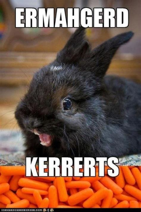 Ermahgerd Animal Memes - funny bunny friday june 2012